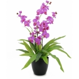 EUROPALMS Orchid, purple, 80cm