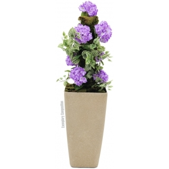 EUROPALMS Hydragena spray, lavender, 76cm #3