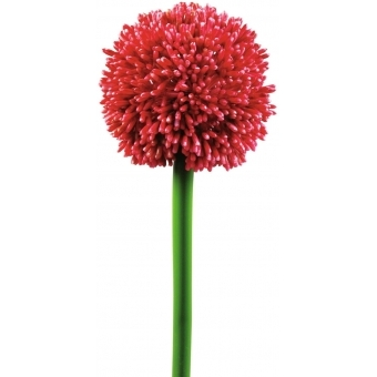 EUROPALMS Allium spray, red, 55cm #2