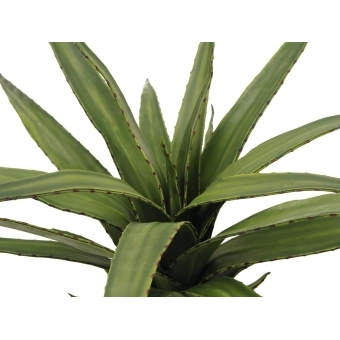 EUROPALMS Aloe (EVA), green, 50cm #2