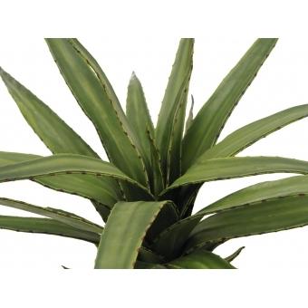 EUROPALMS Aloe (EVA), green, 50cm #2