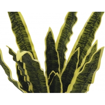 EUROPALMS Sansevieria (EVA), green-yellow, 50cm #2