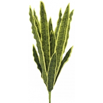 EUROPALMS Sansevieria (EVA), green-yellow, 60cm