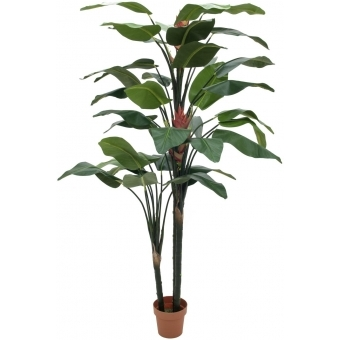 EUROPALMS Bird-of-paradise flower, 220cm