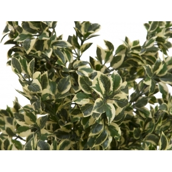 EUROPALMS Wood ficus silver leaf, 120cm #2