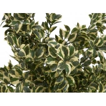 EUROPALMS Wood ficus silver leaf, 120cm #2