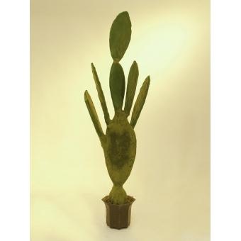 EUROPALMS Nopal cactus, 130cm #2