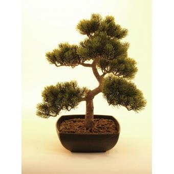 EUROPALMS Pine bonsai, 50cm #2