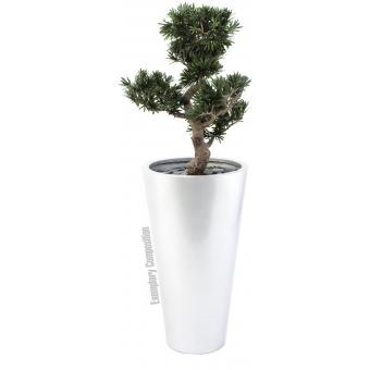 EUROPALMS Bonsai podocarpus, 80cm #2