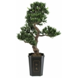 EUROPALMS Bonsai podocarpus, 80cm
