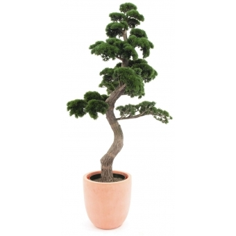 EUROPALMS Pine Bonsai, 168cm