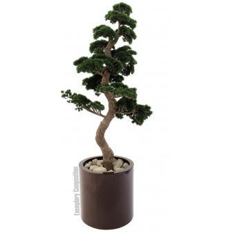EUROPALMS Pine Bonsai, 168cm #2