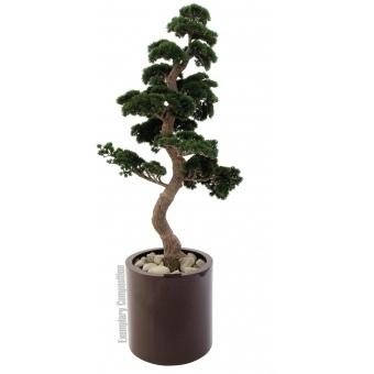 EUROPALMS Pine Bonsai, 168cm #2
