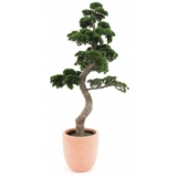 EUROPALMS Pine Bonsai, 168cm