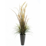 EUROPALMS River grass September, 175cm