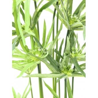 EUROPALMS Cyprus grass, 76cm #2