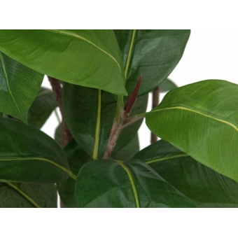 EUROPALMS Rubber tree, 150cm #2
