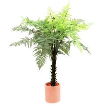 EUROPALMS Woodwardia tree, 180cm