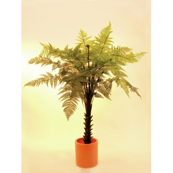 EUROPALMS Woodwardia tree, 180cm #2