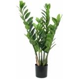 EUROPALMS Zamifolia, 70cm