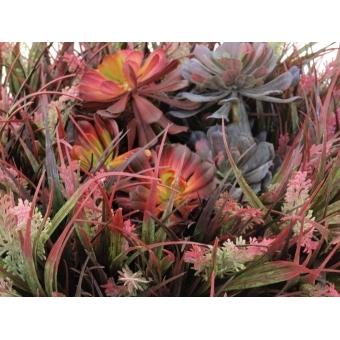 EUROPALMS SucculentAeonium plant, 30cm #2