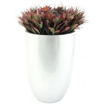 EUROPALMS SucculentAeonium plant, 30cm #3