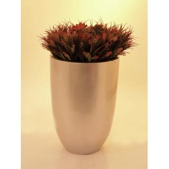EUROPALMS SucculentAeonium plant, 30cm #4