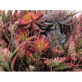 EUROPALMS SucculentAeonium plant, 30cm #5