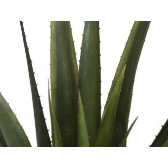 EUROPALMS Aloe vera plant, 60cm #2