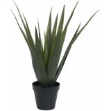 EUROPALMS Aloe vera plant, 60cm