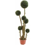 EUROPALMS Box ball tree, 163cm