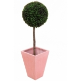EUROPALMS Boxwood tree, 110cm, d=60cm