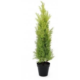 EUROPALMS Cypress, Leyland, 75cm