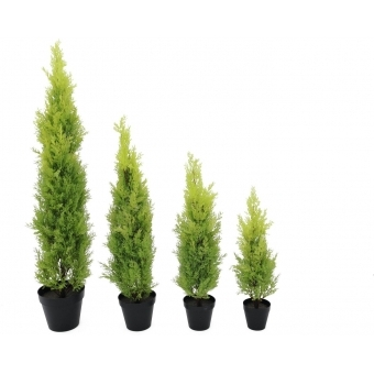 EUROPALMS Cypress, Leyland, 90cm #2