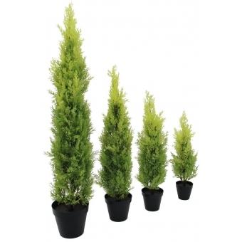 EUROPALMS Cypress, Leyland, 90cm #3