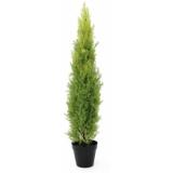 EUROPALMS Cypress, Leyland, 120cm