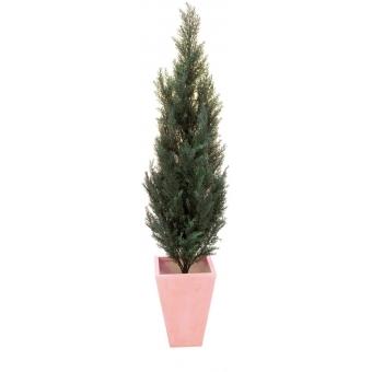 EUROPALMS Cypress, 140cm