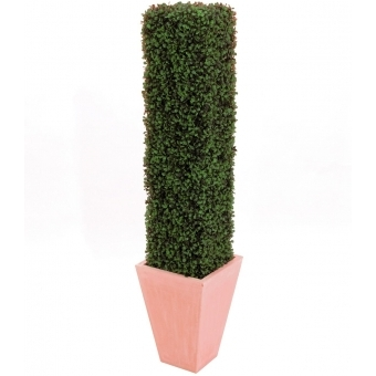 EUROPALMS Boxwood Column, 118cm #2