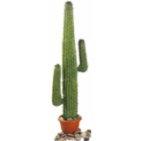 EUROPALMS Mexican Cactus, green, 140cm