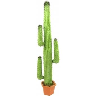 EUROPALMS Mexican Cactus, green, 170cm