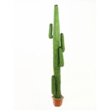EUROPALMS Mexican Cactus, green, 230cm