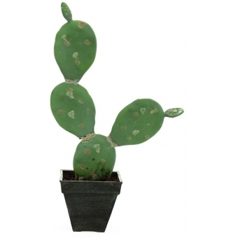 EUROPALMS Prickly pear cactus, 35cm