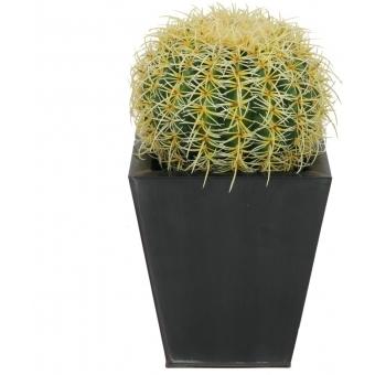 EUROPALMS Barrel Cactus, 27cm #2