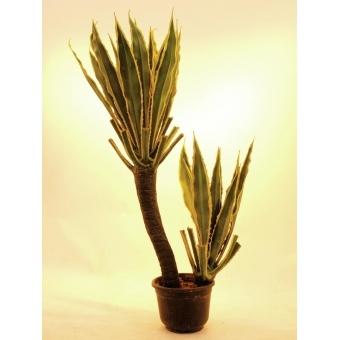 EUROPALMS Orchid-Cactus, 160cm #2