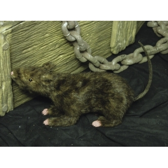 EUROPALMS Rat, lifelike with coat 30cm #2