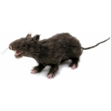 EUROPALMS Rat, lifelike with coat 30cm