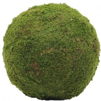 EUROPALMS Moss ball, green, ca.30cm
