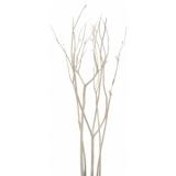 EUROPALMS Mitsumata bunch, bleached, ca.130cm
