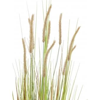 EUROPALMS Fountain grass bush, 120cm #2