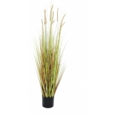 EUROPALMS Fountain grass bush, 120cm